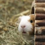 pension animaux de compagnie Estevelles